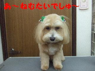 2008_06080015.jpg
