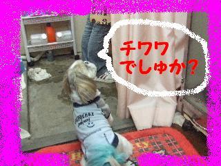2008_06110006.jpg