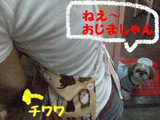 2008_06110008.jpg