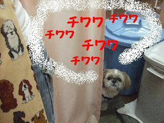 2008_06110011.jpg