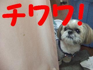 2008_06110012.jpg
