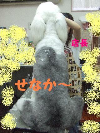 2008_06270022.jpg