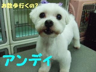 2008_06300025.jpg