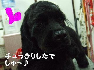 2008_06300034.jpg