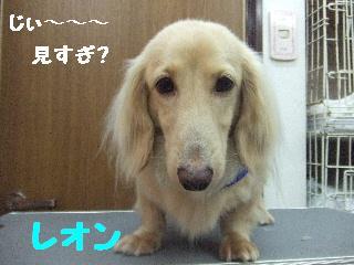 2008_07040059.jpg