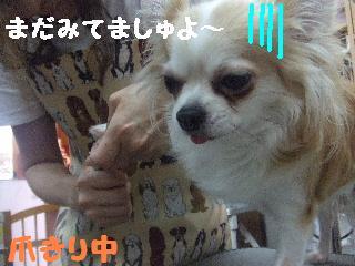 2008_07110005.jpg