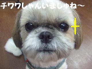 2008_07110007.jpg
