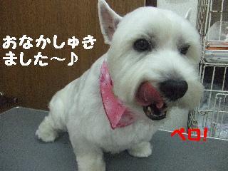 2008_07110020.jpg