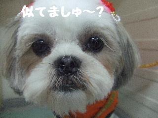 2008_07110038.jpg