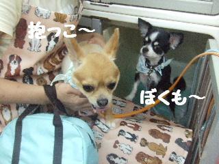 2008_07140069.jpg