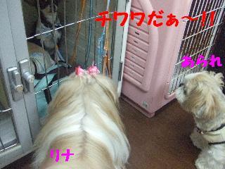 2008_07140071.jpg