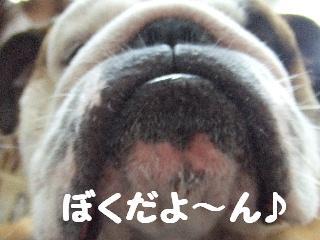 2008_07190148.jpg