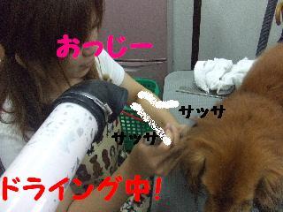 2008_07220021.jpg