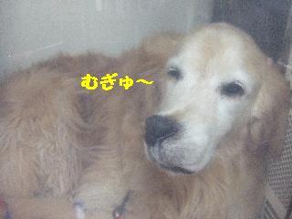 2008_07290025.jpg