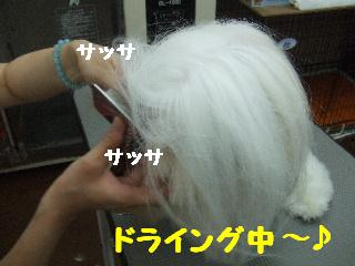 2008_08020059.jpg