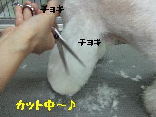 2008_08020074.jpg