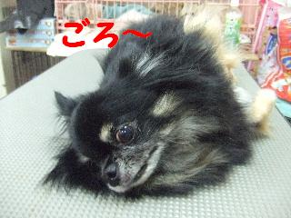 2008_08090039.jpg