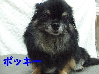 2008_08090043.jpg