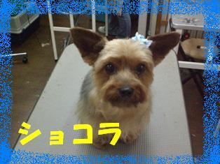 CIMG3892.jpg