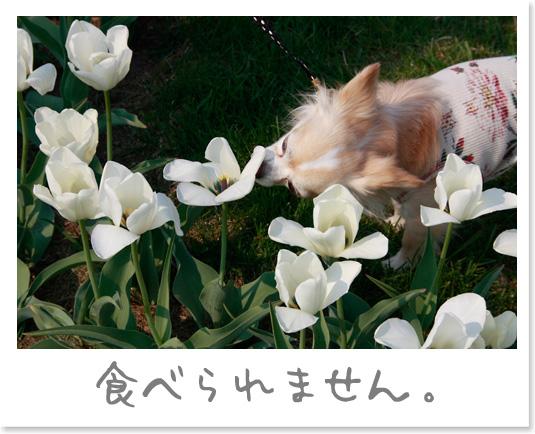 20080518(4).jpg