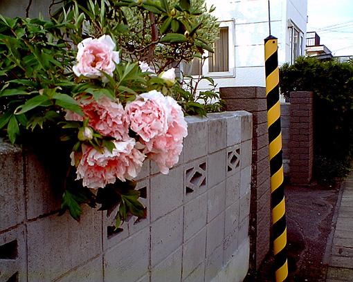 20080530(3).jpg