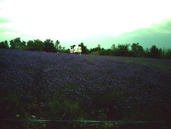 20080713(10).jpg