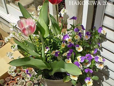 春花壇2008