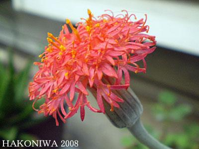 鉄錫丈花5
