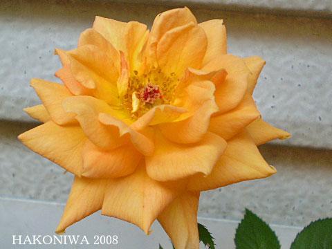 ロジータ20081