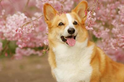 来年は桜と撮影出来ると良いね>新ちゃん