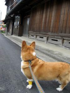 僕のこれからの散歩道~♪