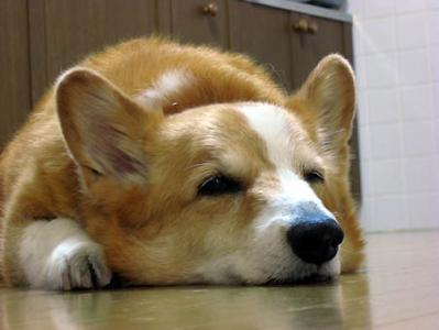 眠いのでほっといてくだしゃい・・・