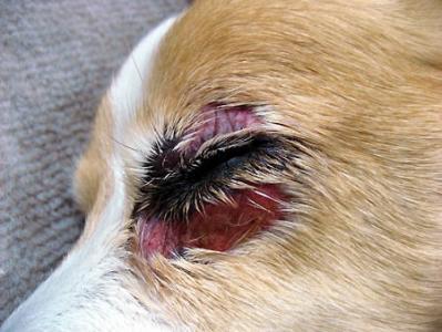 目の周り全体が腫れてきました