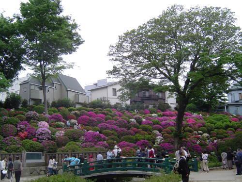 2008 根津つつじ祭05