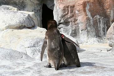 のんほいパーク なぐさめるペンギン