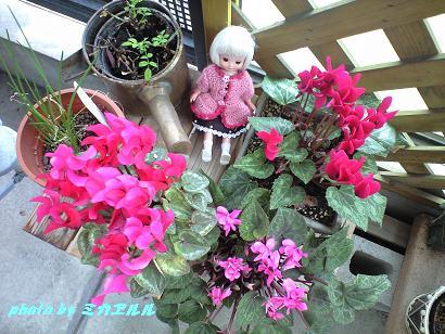 春のベランダCA390081