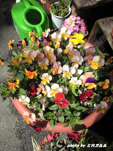 春の花CA390084