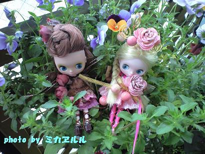 妖精さんでっきー、チョコ・桜CA390152