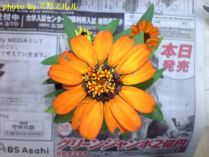 カトル6月お花inお花CA390213