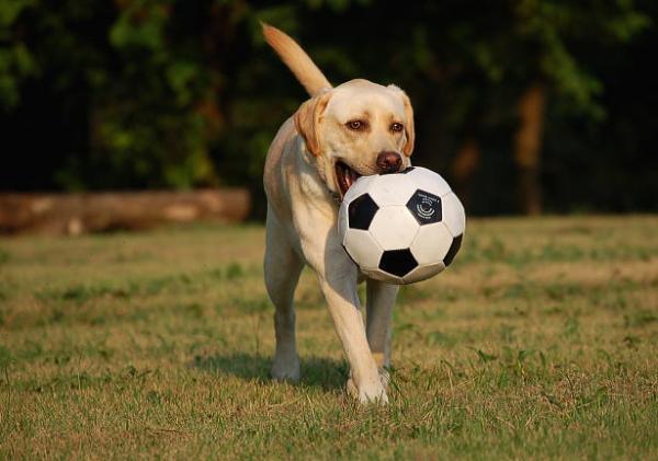 soccerball3.jpg