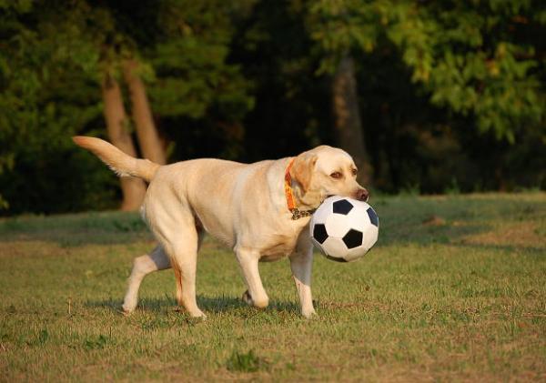 soccerball4.jpg