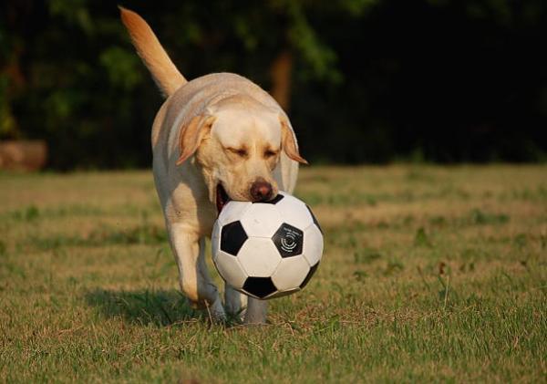 soccerball5.jpg