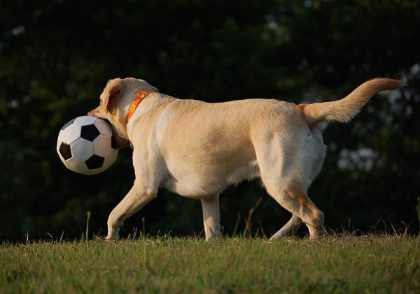 soccerball6.jpg