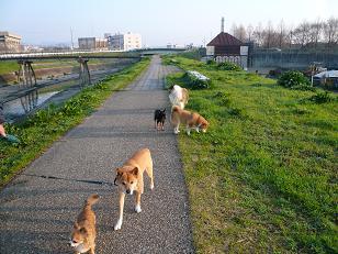 全員で散歩2