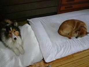 寝るコロ静2