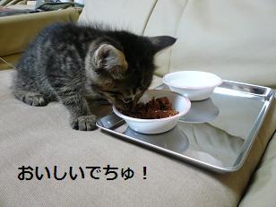 らす食べる
