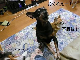パピくれ1