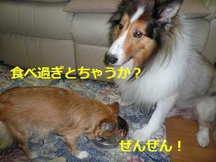 コロご飯3