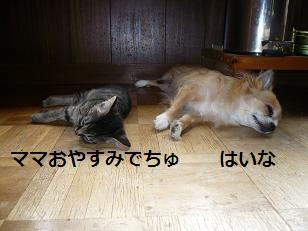 ココラス寝る