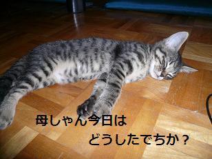 ラスも寝る